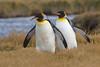 La marcha de los pinguinos by ik_kil
