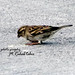 Exotic Bird copy by m.ruhab tahir