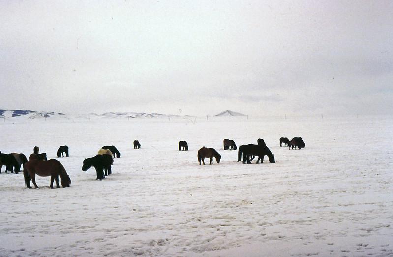 MONGOLIA 1994 01-0013