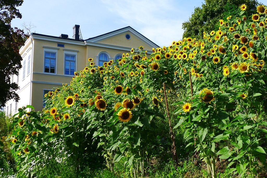 Kumpula Botanic Gardens Kumpulan Kasvitieteellinen Puutarh Flickr