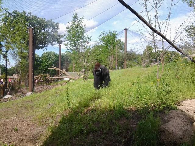 Robert Tischner w/ Deborah Ferrier @ Como Park Zoo