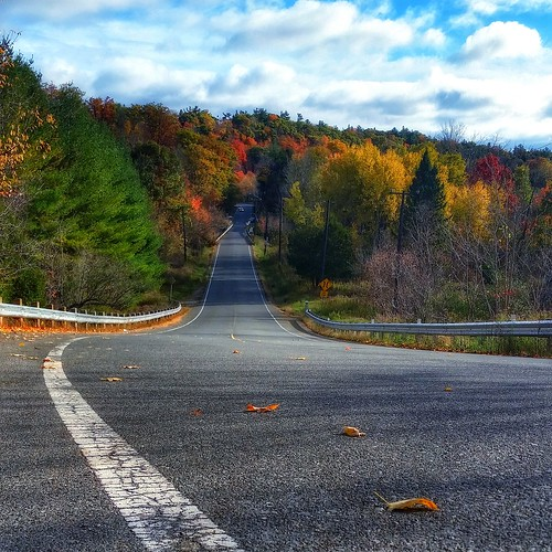 roads leaves lines landscape