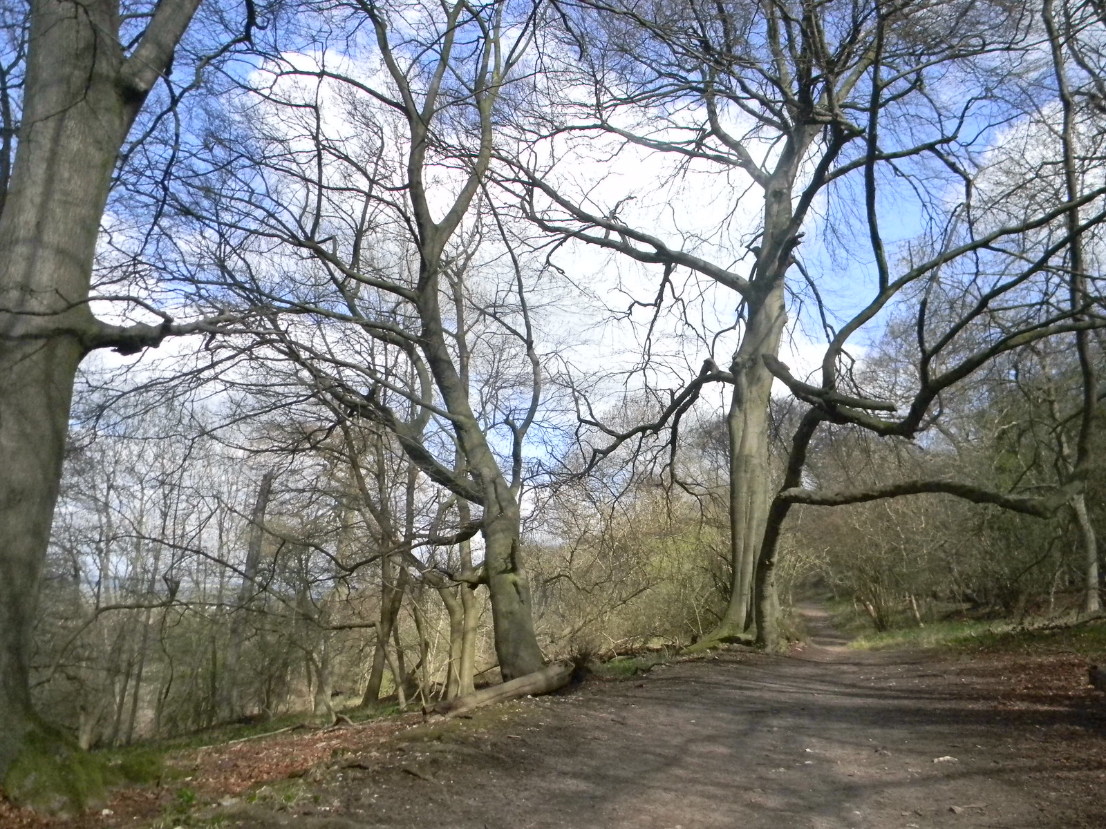 Trees Tring to Berkhamsted