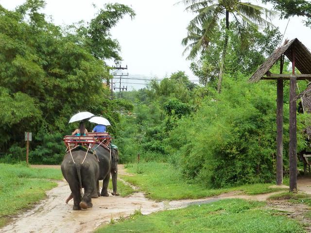 Elephant Trekking - Phuket, Thailand