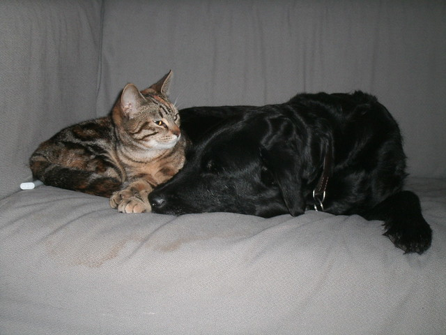 Dogs and cats taking a nap together.
