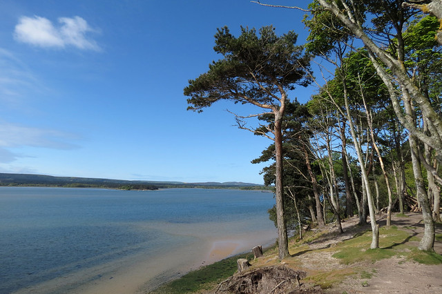 Poole harbour from Brownsea Island