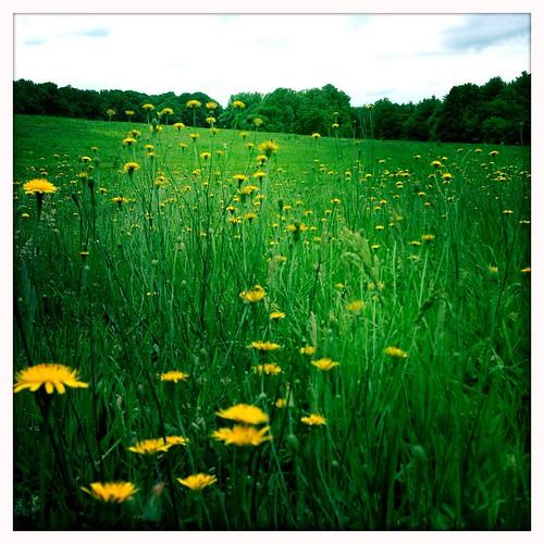 flowers field nc winstonsalem reynoldagardens blanko hipstamatic uploaded:by=flickrmobile flickriosapp:filter=nofilter
