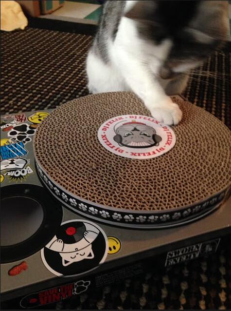 DJ Torgo