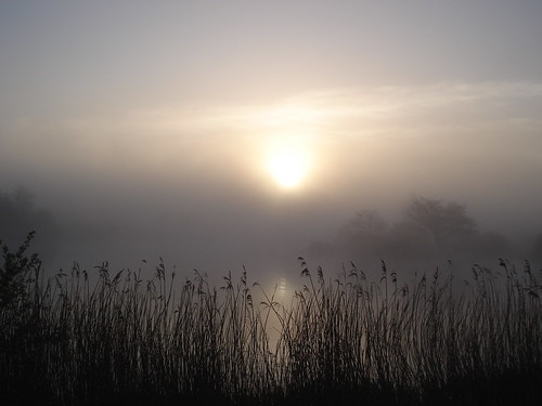 spring dawns 2013