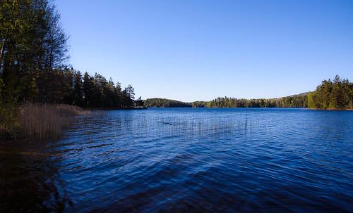lake water forest se sweden biology project365 västragötalandslän riftlake 365photos oligotrophiclake sprickdalssjö