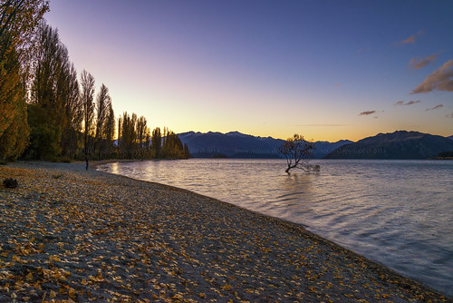 autumn sunset newzealand tourism leaves lakedistrict tourists foliage southisland otago wanaka lakewanaka attraction lonelytree