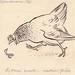 Originale Lyrische Zoologie