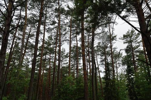 county pine wisconsin forest star highlands state demonstration scotch northern vilas