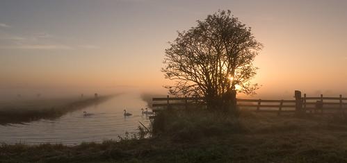 middendelfland canal cows fence fencefriday fog hff misty sundawn sunrise swans tree nederlandvandaag