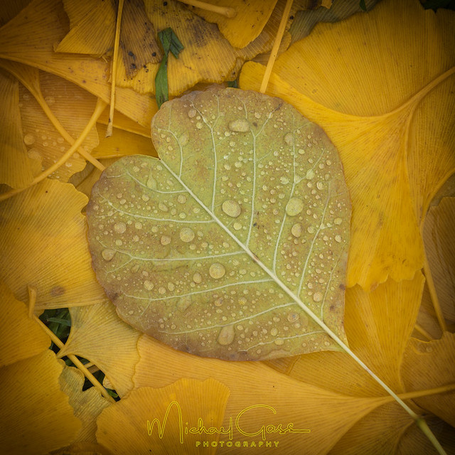 I Heart Autumn Leaves