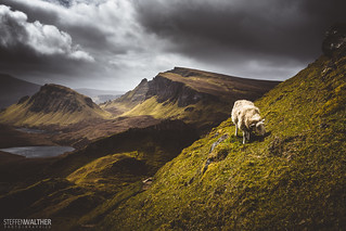 Trotternish sheep | by Steffen Walther
