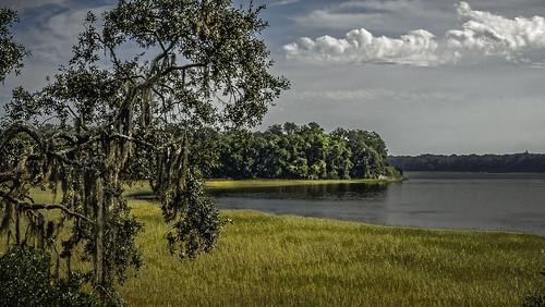 golden marsh savannah georgia south