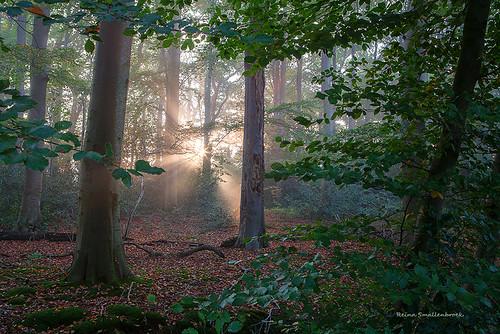 reinasmallenbroek bos nienoordleek leek groningerwesterkwartier westerkwartier groningen netherlands bomen trees tree woods forrest sunrise sunburst zonsopkomst zonnestralen herfst autumn fall
