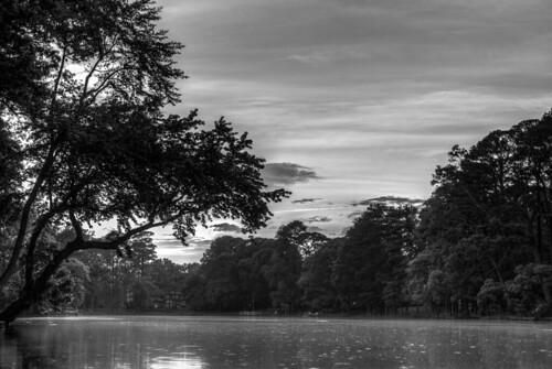 trees sunset blackandwhite bw cloud sun tree water monochrome clouds pond md kayak maryland kayaking delmar millpond blackandwhitesunset leonardsmillpond