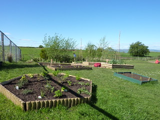 raised beds newly planted at Kilbarchan Primary School garden