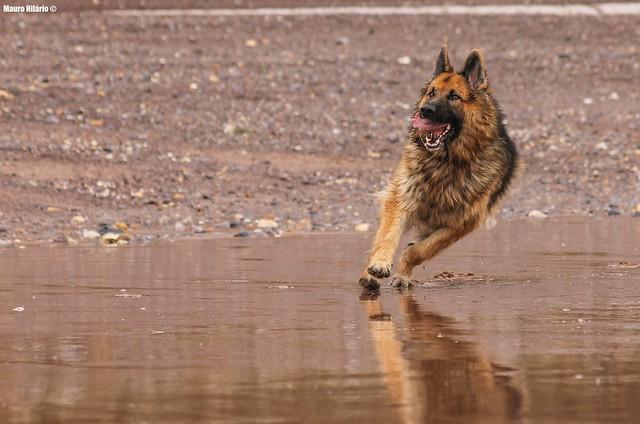 Power Canine!