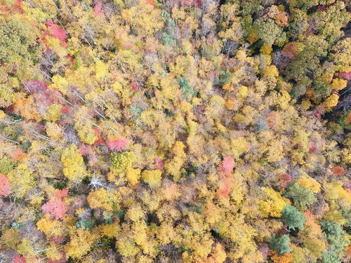 photosbymch landscape aerialphotography fallcolors autumn trees leaves canopy blueridgeparkway appalachianmountains northcarolina usa dji inspirephotos x5 mountains outdoors