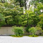 桔梗 - 廬山寺 / Rozan-ji Temple