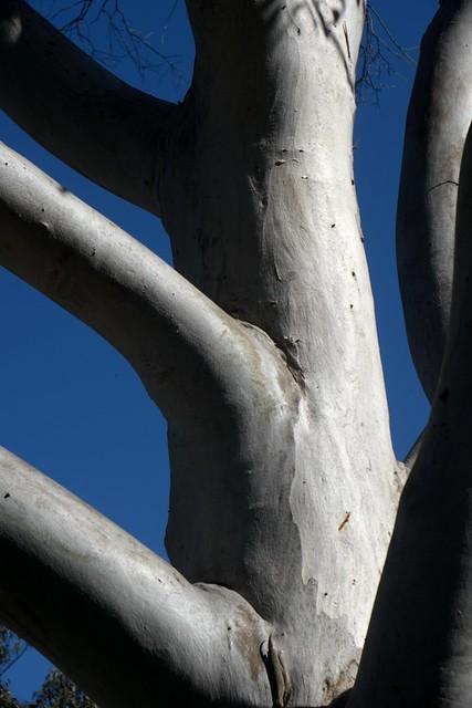 Tree Fork (f44) B as shot
