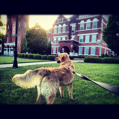 dog goldenretriever square squareformat iphoneography instagramapp xproii uploaded:by=instagram foursquare:venue=4dd3e7141fc74f570dcf4c40