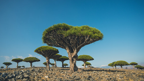 Left my heart in Socotra. | by Lomoody