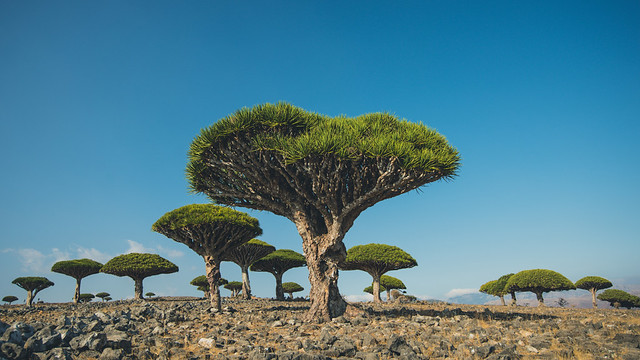 Left my heart in Socotra.