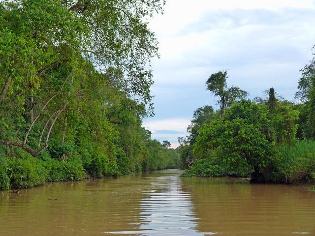Río Kinabatangan en Borneo (Malasia)