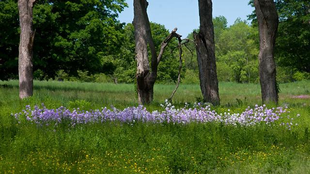 Concord meadow