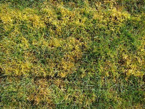 Moss | by Oregon State University