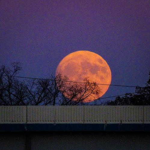 moon moonrise november gold blue dappled supermoon