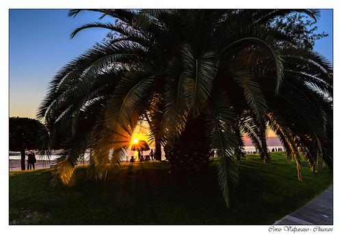 chiavari europa italien sunset liguria it europe italy italia ligurien sun palmtrees palmen topaz nikfilter nikon natur nature landschaft landscape d7200 tamron 18270mm lightroom