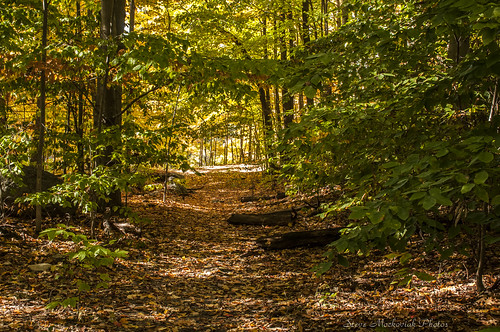 smack53 waywayandastatepark newjerseystatepark trees autumn autumncolors fall fallcolors fallseason foliage vernon newjersey nikon d300 nikond300