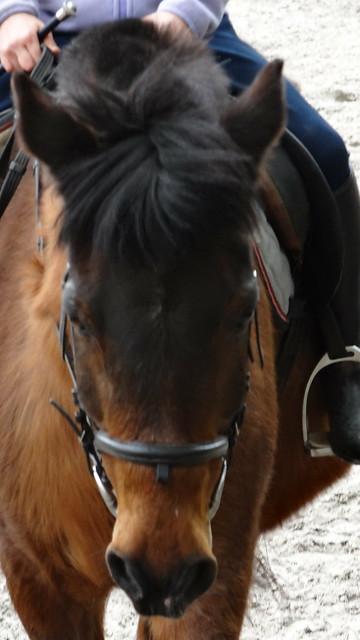 Pferd mit krausen Nüstern prüft das Roß die Luft, dann wiehert es muthig nur wie ich herrsche, dient das Thier, ein Druck, von dannen fliegt es mit mir, als wäre mein Sporn schon blutig 1124
