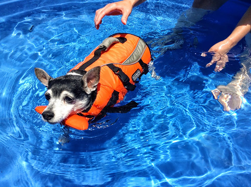2013-07-04 - Mags in her new pool - 0003