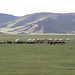 Mongolsko, foto: Alena Oberfalzerová