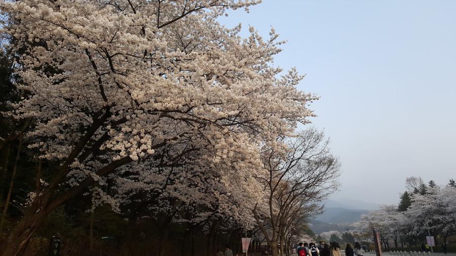 Nguyen, Anna; South Korea - Episode 12 (4)