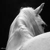 horse_A.P (4)