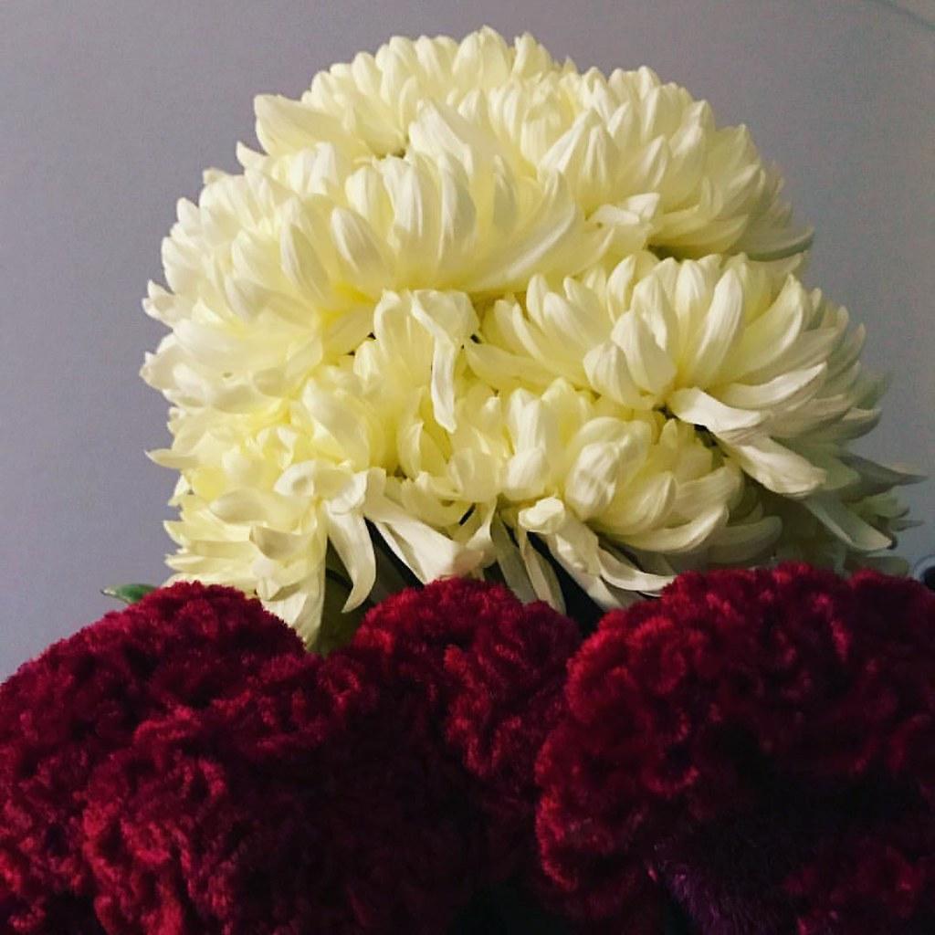 Bonsoir Mes Belles Chrysanthemes Cretedecoq Ebarrera Flickr