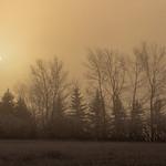 Fog Shrouded Sunrise