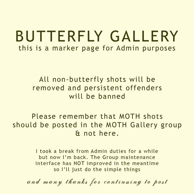 GalleryMarkerButterfly