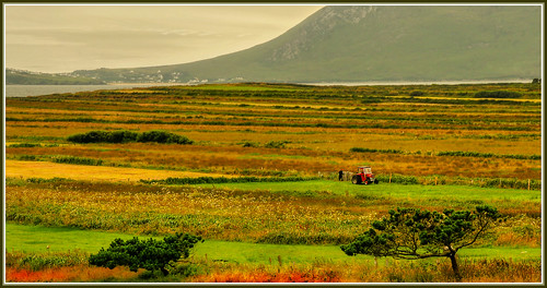 trees sea colour field canon patterns hills mayo hdr