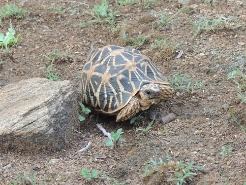 trekking star nikon wildlife tortoise kerala chinnar p510