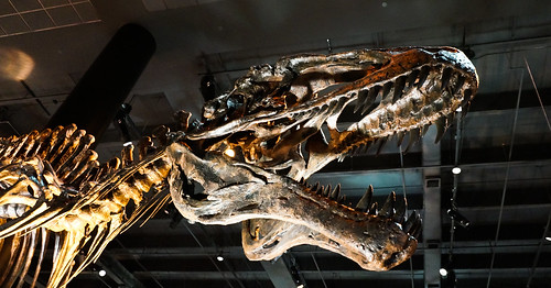 Houston Museum of Natural Science-9 | by mkhatri1