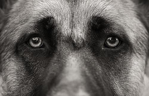 Eyes Of An Angel Deutsch