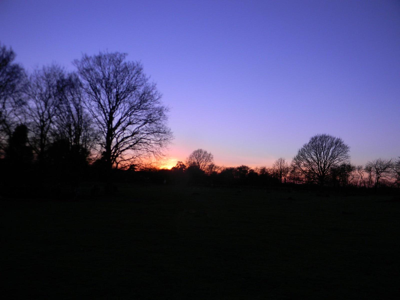 Trees at dusk 1 Appledore Short Circular